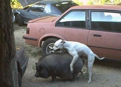 dog-hump8